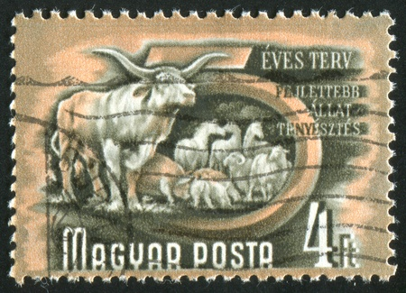 HUNGARY- CIRCA 1950: stamp printed by Hungary, shows livestock, circa 1950 photo