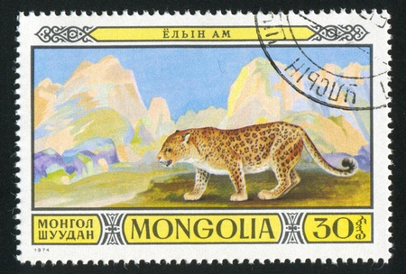 catamountain: MONGOLIA - CIRCA 1974: stamp printed by Mongolia, shows Leopard, circa 1974 Stock Photo