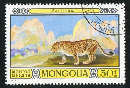 catamountain: MONGOLIA - CIRCA 1974: stamp printed by Mongolia, shows Leopard, circa 1974 Stock Photo