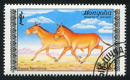 baby ass: MONGOLIA - CIRCA 1988: stamp printed by Mongolia, shows Mongolian onager, circa 1988 Stock Photo