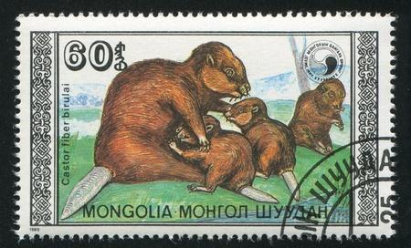 MONGOLIA - CIRCA 1989: stamp printed by Mongolia, shows Beavers with  calf, circa 1989 photo