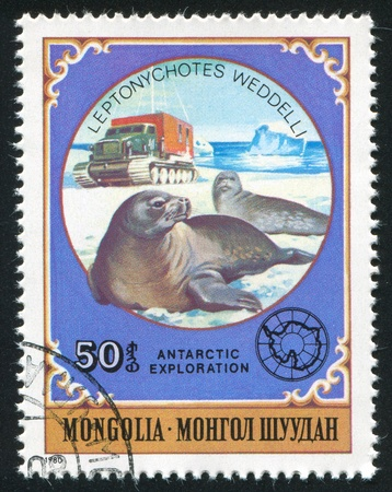 MONGOLIA - CIRCA 1980: stamp printed by Mongolia, shows Weddel Seals, circa 1980 Stock Photo - 12740976