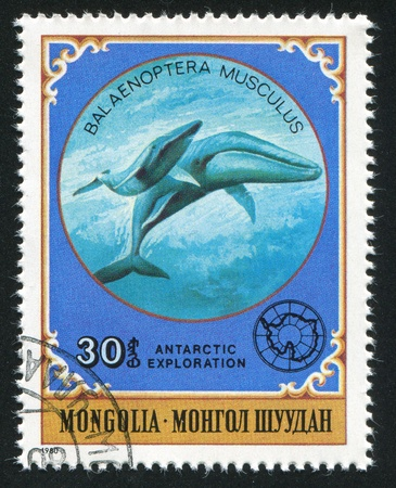 MONGOLIA - CIRCA 1980: stamp printed by Mongolia, shows Two whales, circa 1980 Stock Photo - 12734232