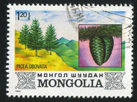 picea: MONGOLIA - CIRCA 1982: stamp printed by Mongolia, shows Picea Obovata, circa 1982