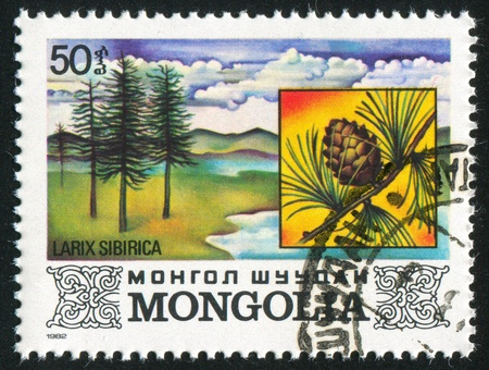 MONGOLIA - CIRCA 1982: stamp printed by Mongolia, shows Larix Sibirica, circa 1982 photo