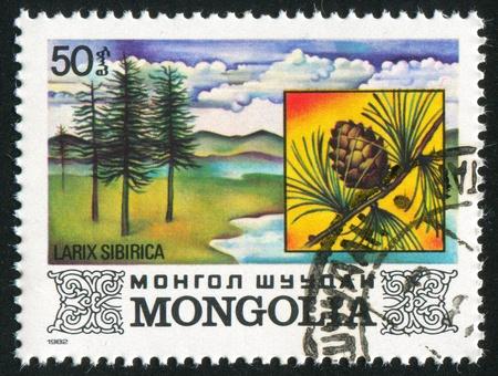 larix sibirica: MONGOLIA - CIRCA 1982: stamp printed by Mongolia, shows Larix Sibirica, circa 1982