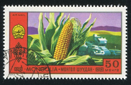 MONGOLIA - CIRCA 1972: stamp printed by Mongolia, Corn, circa 1972 photo