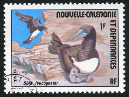 booby: NEW CALEDONIA - CIRCA 1976: stamp printed by New Caledonia, shows Brown Booby, circa 1976