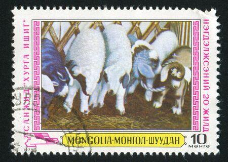 MONGOLIA - CIRCA 1979: stamp printed by Mongolia, shows Lambs, circa 1979 photo