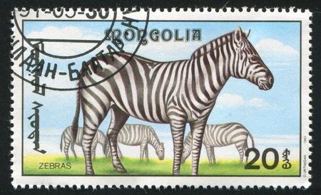 MONGOLIA - CIRCA 1991: stamp printed by Mongolia, shows zebras, circa 1991 photo