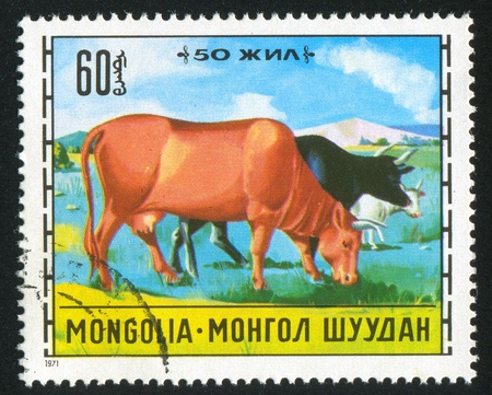 MONGOLIA - CIRCA 1971: stamp printed by Mongolia, shows Mongolian livestock breeding, Cattle, circa 1971 Stock Photo - 12787594