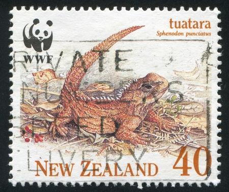 NEW ZEALAND - CIRCA 1991: stamp printed by New Zealand, shows Tuatara, male, circa 1991