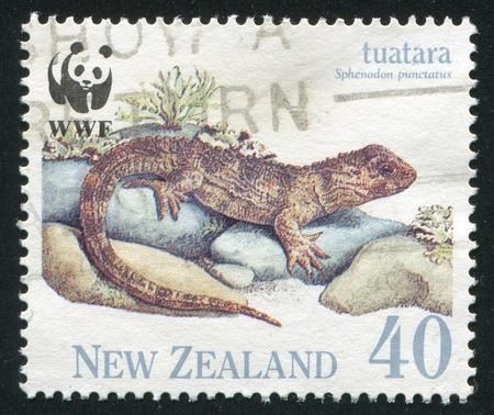NEW ZEALAND - CIRCA 1991: stamp printed by New Zealand, shows Tuatara, juvenile, circa 1991