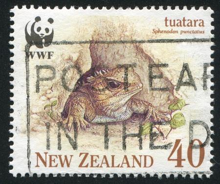 NEW ZEALAND - CIRCA 1991: stamp printed by New Zealand, shows Tuatara in burrow, circa 1991 photo