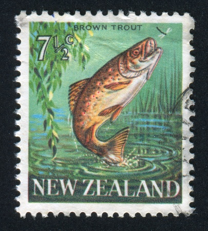 NEW ZEALAND - CIRCA 1967: stamp printed by New Zealand, shows Brown trout, circa 1967 Stock Photo - 12787920
