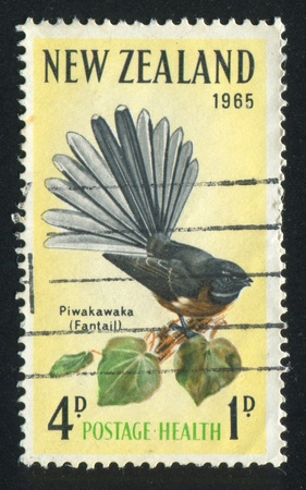 warble: NEW ZEALAND — CIRCA 1965: stamp printed by New Zealand, shows  fantail, circa 1965 Stock Photo
