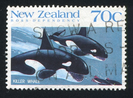 chasing tail: NEW ZEALAND — CIRCA 1988: stamp printed by New Zealand, shows whale hunt, circa 1988 Stock Photo