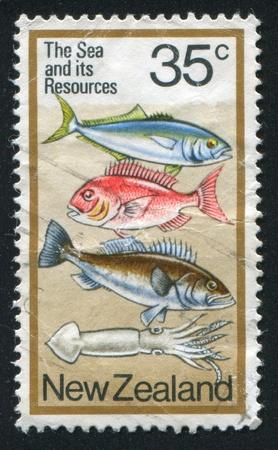 NEW ZEALAND CIRCA 1978: stamp printed by New Zealand, shows  fish, circa 1978 photo