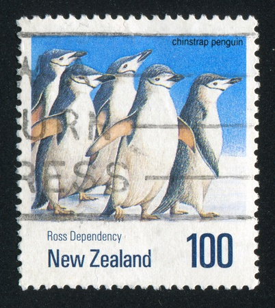 NEW ZEALAND — CIRCA 1990: stamp printed by New Zealand, shows penguin chinstrap, circa 1990 photo