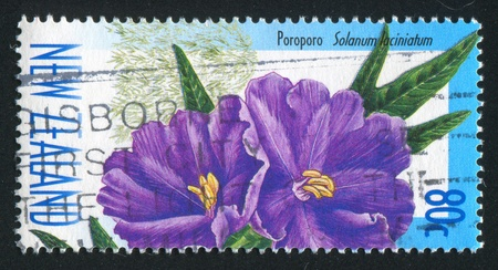 lobed: NEW ZEALAND CIRCA 1999: stamp printed by New Zealand, shows  flower lobed nightshade poroporo, circa 1999