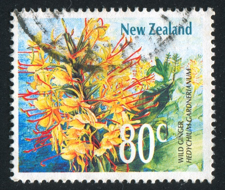 caulis: NEW ZEALAND — CIRCA 1989: stamp printed by New Zealand, shows  ginger, circa 1989