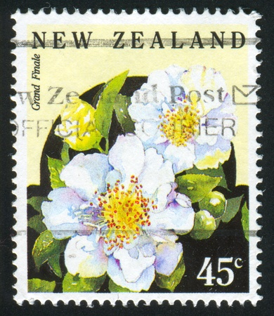 NEW ZEALAND — CIRCA 1992: stamp printed by New Zealand, shows dahlia grand finale, circa 1992 Stock Photo - 12787071