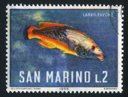 SAN MARINO - CIRCA 1966: stamp printed by San Marino, shows Cuckoo wrasse, circa 1966 Stock Photo - 12999257