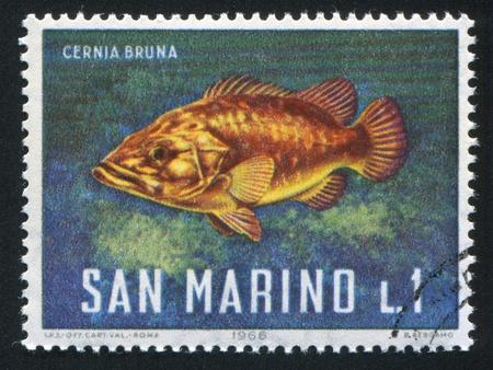 SAN MARINO - CIRCA 1966: stamp printed by San Marino, shows Stone Bass, circa 1966 Stock Photo - 12999174