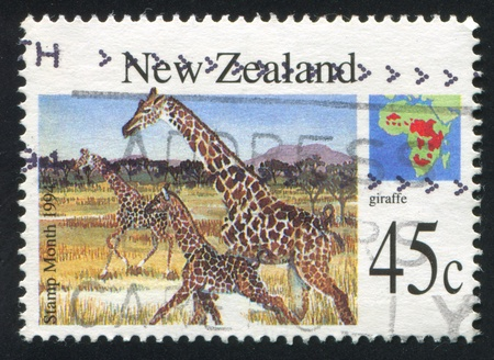 NEW ZEALAND - CIRCA 1994: stamp printed by New Zealand, shows geraffe, circa 1994 photo