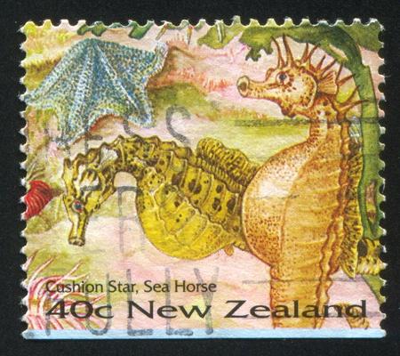 cushion sea star: NEW ZEALAND - CIRCA 1996: stamp printed by New Zealand, shows Cushion Star, Sea Horse, circa 1996