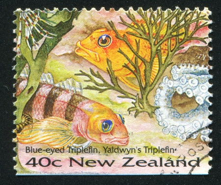 NEW ZEALAND - CIRCA 1996: stamp printed by New Zealand, shows Blue-eyed Triplefin, Yaldwyns Triplefin, circa 1996 photo