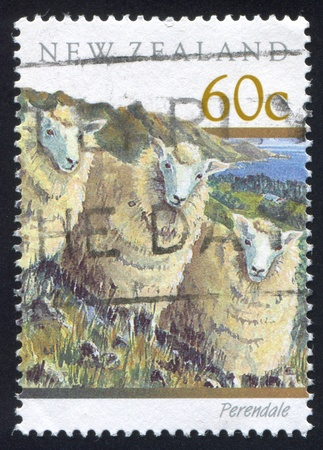 NEW ZEALAND - CIRCA 1991: stamp printed by New Zealand, shows perendale sheep, circa 1991 Stock Photo - 13117818