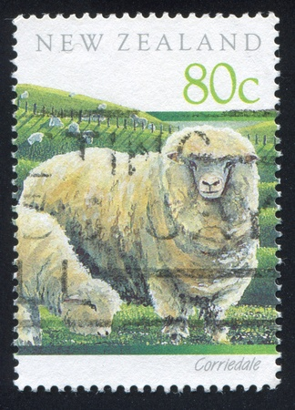 NEW ZEALAND - CIRCA 1991: stamp printed by New Zealand, shows Corriedale sheep, circa 1991