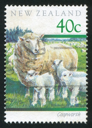 NEW ZEALAND - CIRCA 1991: stamp printed by New Zealand, shows Coopworth sheep, circa 1991