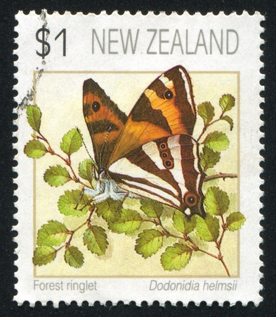 NEW ZEALAND - CIRCA 1991: stamp printed by New Zealand, shows butterfly, circa 1991 photo