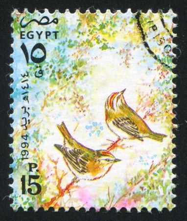 abjad: EGYPT - CIRCA 1994: stamp printed by Egypt, shows Egyptian swallow, circa 1994.