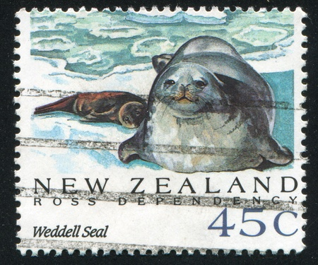 NEW ZEALAND - CIRCA 1992: stamp printed by New Zealand, shows Antarctic Seals, Weddell seal, circa 1992 Stock Photo - 13353774