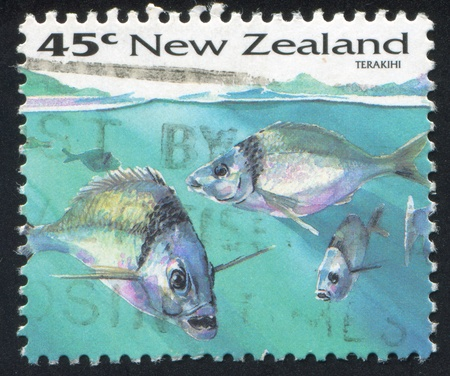 NEW ZEALAND - CIRCA 1993: stamp printed by New Zealand, shows Fish, Terakihi, circa 1993 Stock Photo - 13361493