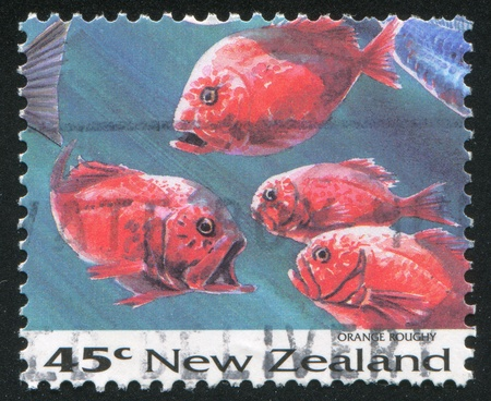 NEW ZEALAND - CIRCA 1993: stamp printed by New Zealand, shows Fish, Orange roughy, circa 1993 Stock Photo - 13356975