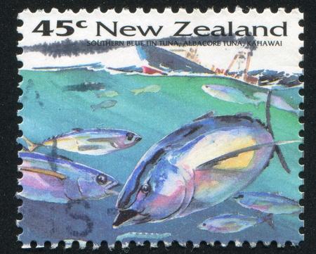 atun rojo: NUEVA ZELANDA - CIRCA 1993: sello impreso por Nueva Zelanda, muestra de pescado, el at�n aleta azul del sur, el at�n blanco, kahawai, alrededor del a�o 1993 Foto de archivo