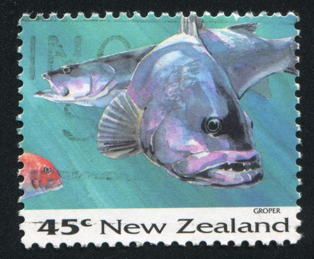 NEW ZEALAND - CIRCA 1993: stamp printed by New Zealand, shows Fish, Grouper, circa 1993 Stock Photo - 13361504