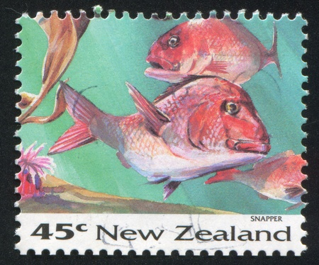 NEW ZEALAND - CIRCA 1993: stamp printed by New Zealand, shows Fish, Snapper, circa 1993 Stock Photo - 13361494