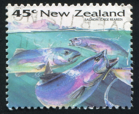 NEW ZEALAND - CIRCA 1993: stamp printed by New Zealand, shows Fish, Salmon, (Cage Reared), circa 1993 Stock Photo - 13361491