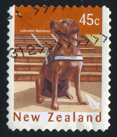 NEW ZEALAND - CIRCA 2006: stamp printed by New Zealand, shows Labrador Retriever, circa 2006