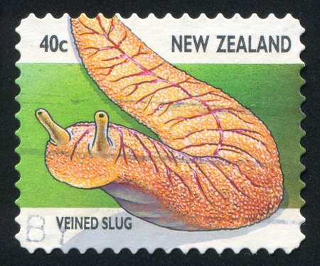 coeliac: NEW ZEALAND - CIRCA 1997: stamp printed by New Zealand, shows Creepy Crawlies, Veined slug, circa 1997