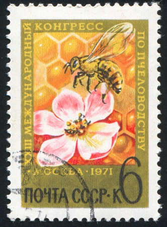 RUSSIA - CIRCA 1971 stamp printed by Russia, shows Bee and Blossom, circa 1971 photo