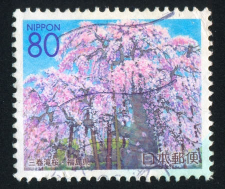 JAPAN - CIRCA 2000: stamp printed by Japan shows Cherry Blossoms, circa 2000 photo