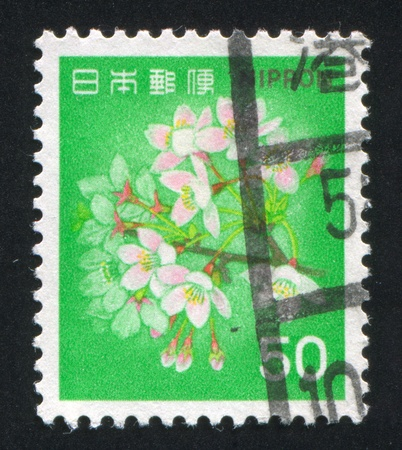 JAPAN - CIRCA 1980: stamp printed by Japan shows Cherry Blossoms, circa 1980 photo