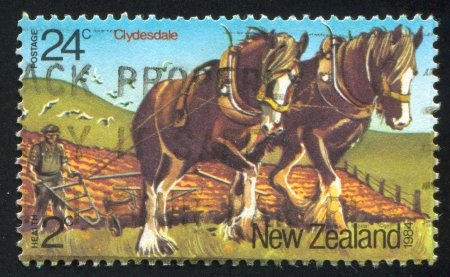 NEW ZEALAND - CIRCA 1984: stamp printed by New Zealand, shows Horses, Clydesdales, circa 1984 photo