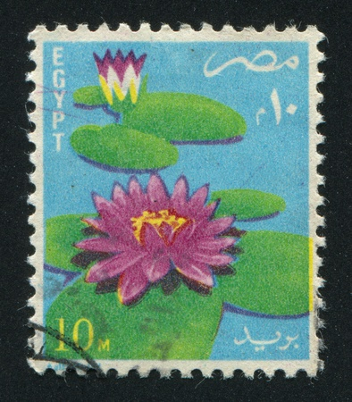 abjad: EGYPT - CIRCA 1976: stamp printed by Egypt, shows Water Flowers, circa 1976 Stock Photo